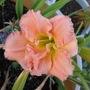 Flowers.6.13.08_002
