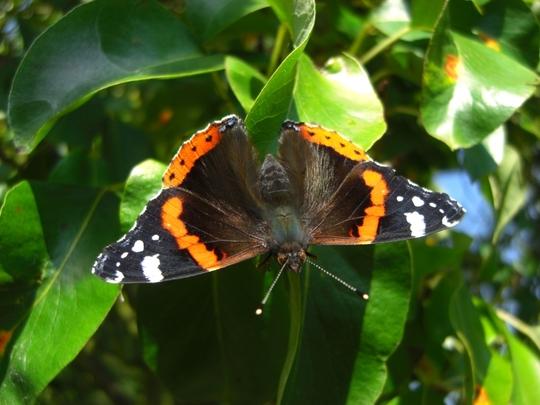 Butterfly full span
