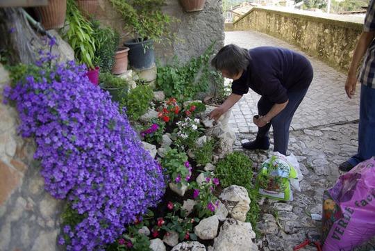 Romeo's mum rummaging amongst the rocks, (she and Napoleon's mum are my personal gardeners!!)