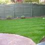My New Lawn