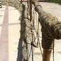 Simple Fencing!!!