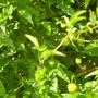 september_garden_001.jpg