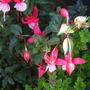 september_garden_004.jpg