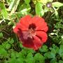 september_garden_005.jpg