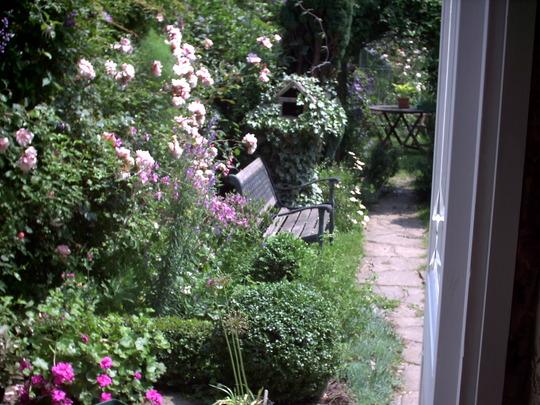 my garden 1 (Albertine rose)