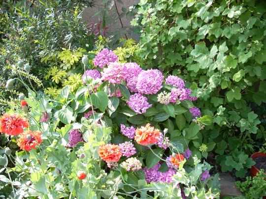 Garden-July_003.jpg