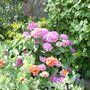 Garden_july_003