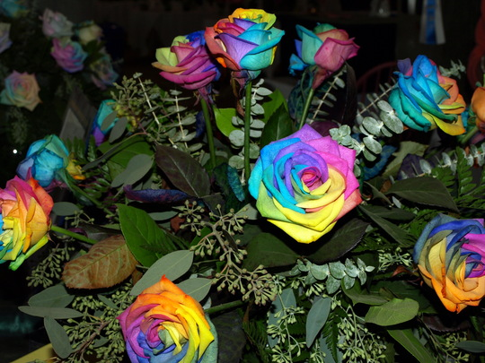tie dye roses grows on you