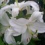 Joes_garden_4_004