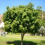 Balboa_park_3_13_08_064