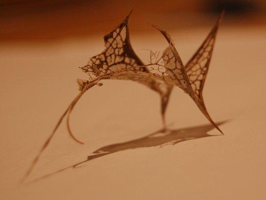 Holly leaf skeleton