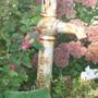 water spout (Sedum ellacombeanum (Stonecrop))