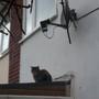 Satellite Cat