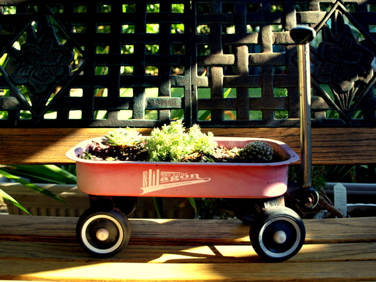 Succulents in Toy Wagon