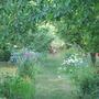 My Garden in Summer