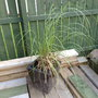 Another random plant in my garden