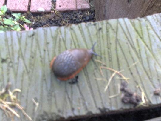 Out of focus slug that i found.