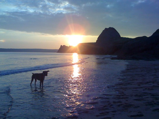 Harvey at sunset on beach