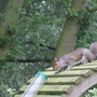 Squirrel - Going, going!