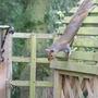 Squirrel - Gone!