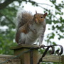 Squirrel - Cause chaos - who? Me?!!