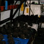 Begonias out of their pots. (Begonia)