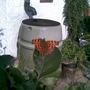 Butterfly in in-laws garden 2