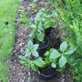 Autumn_planting_005