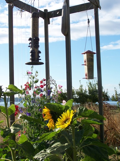 sunflower birds (Sweetpeas & Sunflowers)