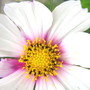 Cosmos... from a friend