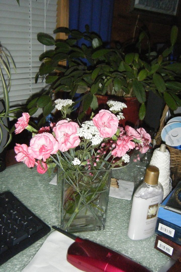 Easter cactus and Cut Carnations (Dianthus)
