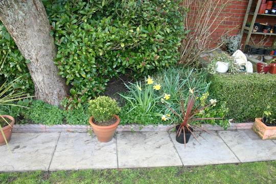 Rear garden Spring 2005.