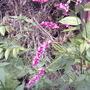 Kiss Me Over the Garden Gate (Persicaria orientalis)