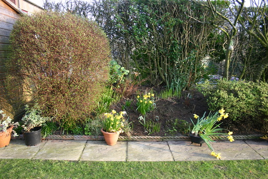 Rear garden Spring 2005 left border 1