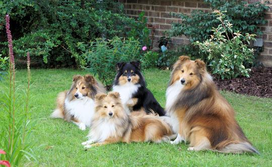 The Fleurdemai clan