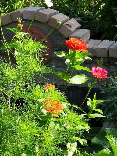 Another pic of Zinnias, Cosmos and the pond...
