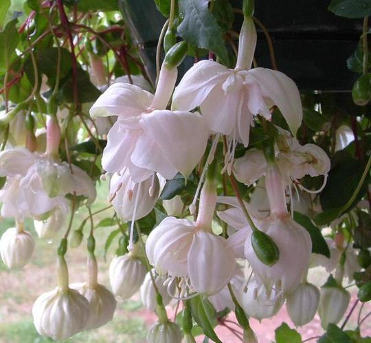 one of my fav plants