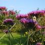 Still_blooming_sept_08_001