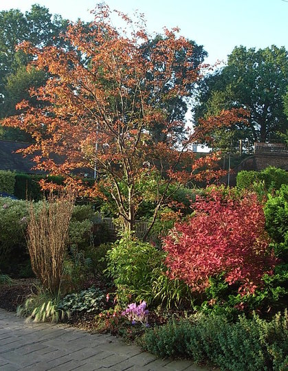 Front garden - September 2008