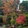 Front_garden_september_2008