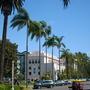 Syagrus romansofiana - Queen Palm (Syagrus romansofiana - Queen Palm)