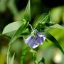 Bird seed flower