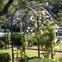Trellis with vines, rose garden.