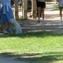 A dog enjoying the park.