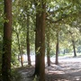 The most shady part of the trail, Memorial Park.