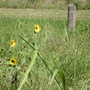 Flowers by the trail, Memorial Park.