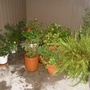 The plants sheltering in place.