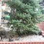 Mums Tree
