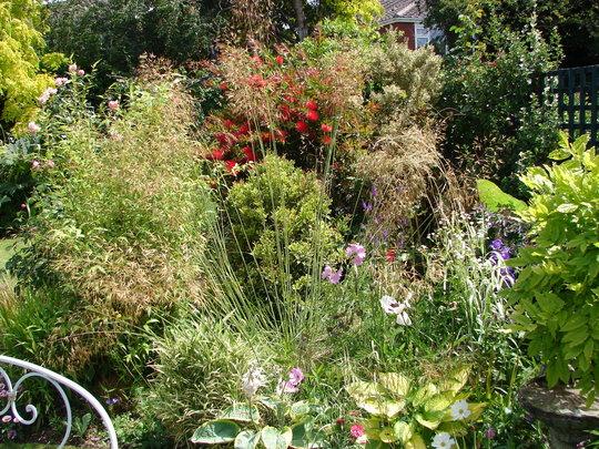 Garden views (Stipa gigantea (Giant feather grass))
