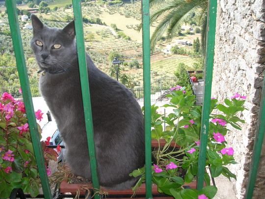 Oh dear it's not just flowerpot people - you have to watch out for flowerpot cats as well